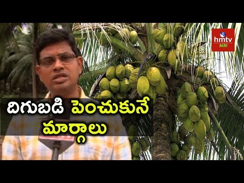 Tips To Increase Coconut Yield | hmtv Agri