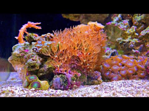REEF CRASH - Nano Reef Tank NO SKIMMER