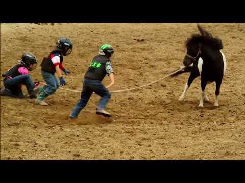 Busten ass ranch mule auction