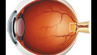 إيقاظ علمي :محور العين ( الأعضاء الواقية ، الأعضاء الدّاخليّة ، عيوب الرّؤية ،