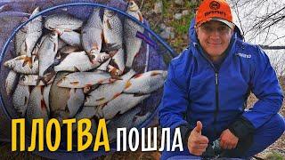 ХОД ПЛОТВЫ на Днепре. Рыбалка на фидер ранней весной.