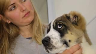 Как правильно вакцинировать щенка. Как обработать щенка от блох и клещей.