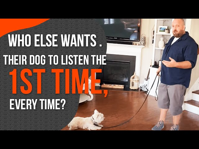 Dog Obedience Training- How to Get Your Dog to Listen the First Time Every Time