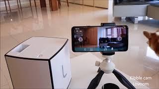 Best interactive pet camera   Dog reaction #6   pet gadget