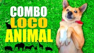 COMBO LOCO ANIMAL thumbnail