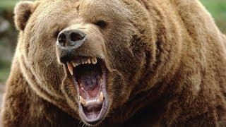 Как Спастись от Медведя Туристу  в Тайге Выживание с Фальшфейером