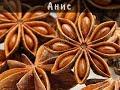 Анис лечебные свойства Вкус и запах аниса Анис применение купить mp3