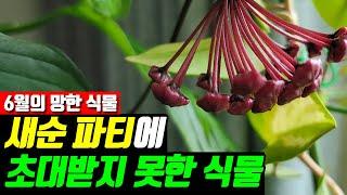 거실정원 새순파티에 초대받지 못한 식물