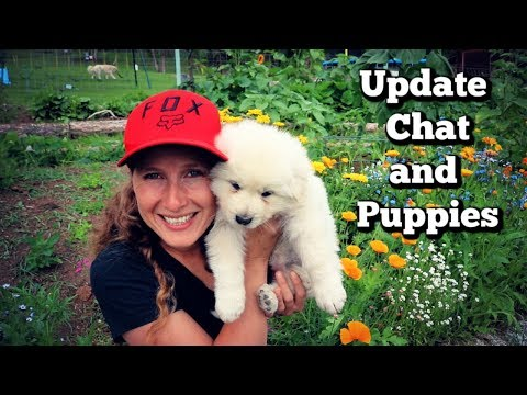 Sit Down Update Chat | I've Missed you! | LDG Puppies!