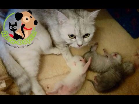 Какие прививки делают котятам и когда делать прививки