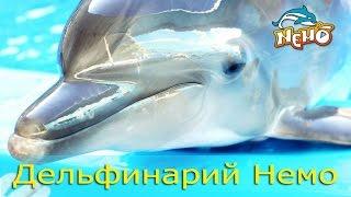 Дельфинарий Немо Супер шоу Дельфинов