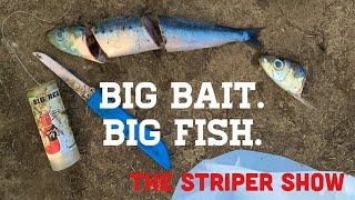 Los Vaqueros California Striper Fishing The Striper Show