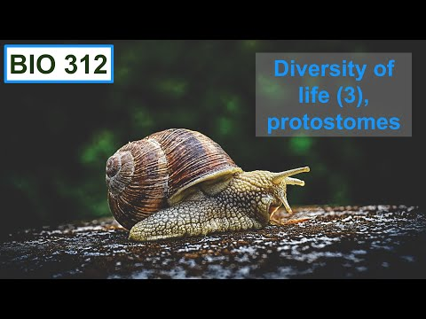 Bio 312 video 27: Diversity of life 3