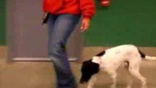 Blaire From Q102 Put K9 Basics To The Test With Wilson