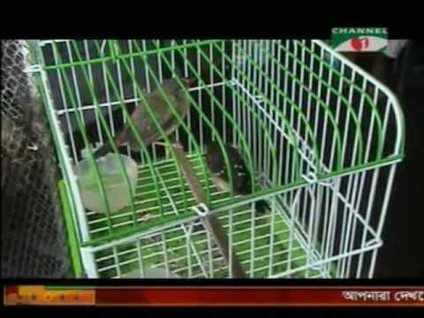 Channel-i, wildlife trade in bangladesh - [Prokriti o jibon]