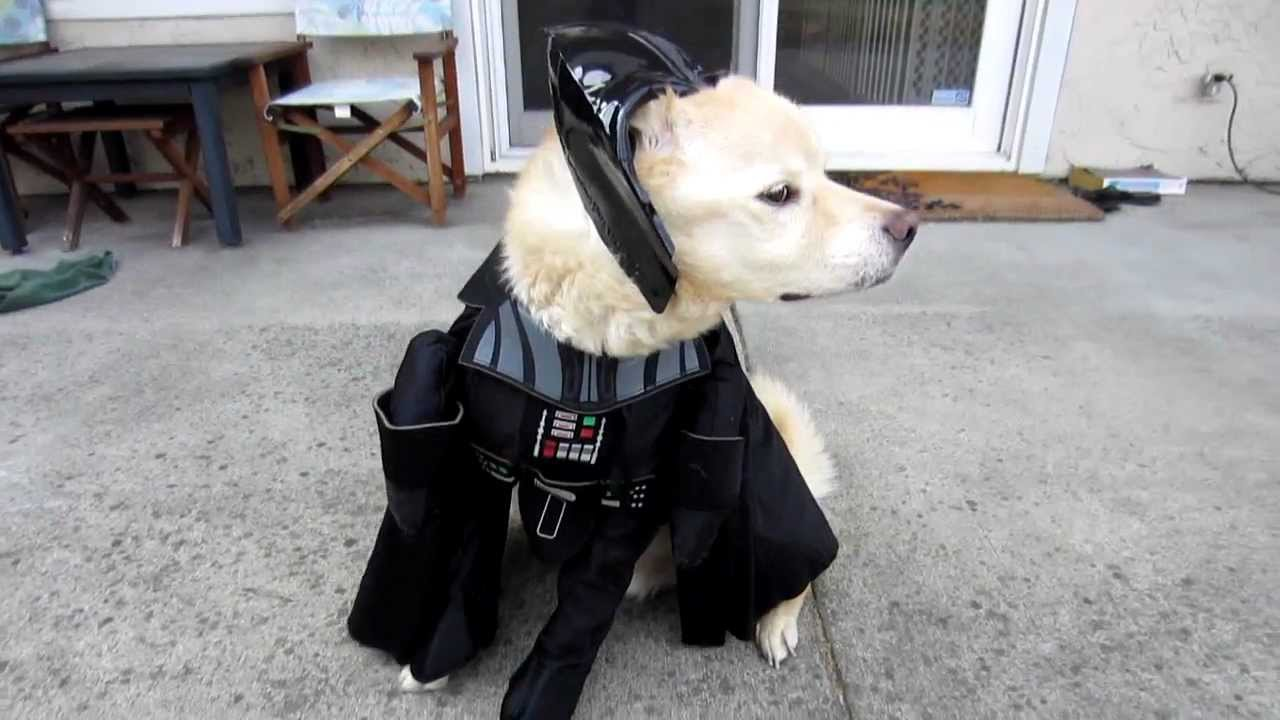 Star Wars Darth Vader Pet Dog Halloween Costume - YouTube