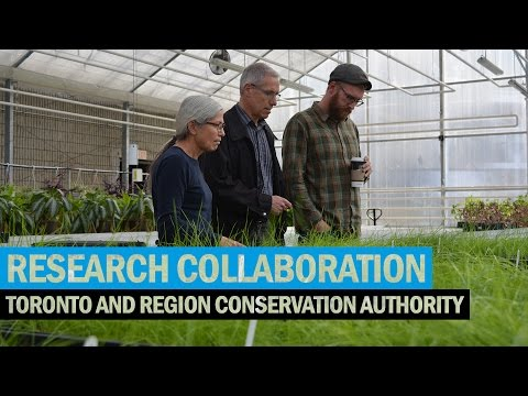 Research Collaboration – Humber & Toronto and Region Conservation Authority