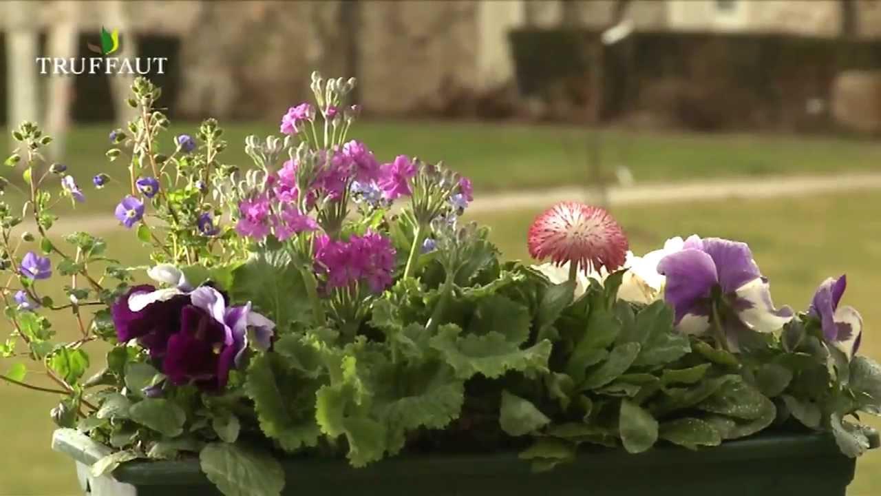 Fleurs bisannuelles plantation entretien et jardini res jardinerie truffaut tv youtube - Truffaut jardiniere ...