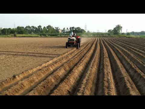 Image result for punjab pttato farm
