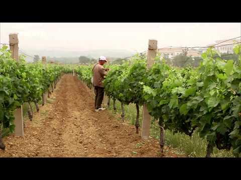 Dokumentarfilm Gelber Drache, roter Wein. Wie Chinesen französische Weingüter aufkaufen