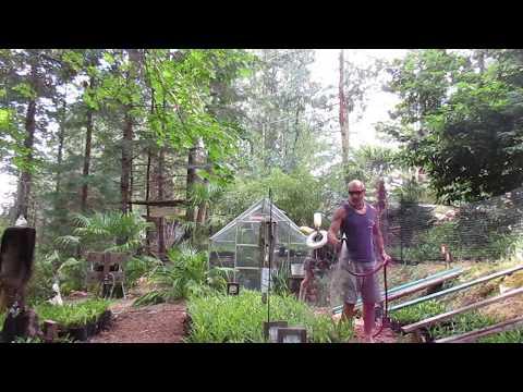 Palm Tree Nursery Canadian Style