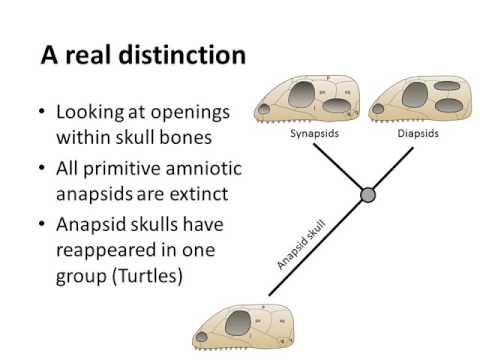 Dinosaurs a short history