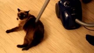 сиамский кот и пылесос 2012