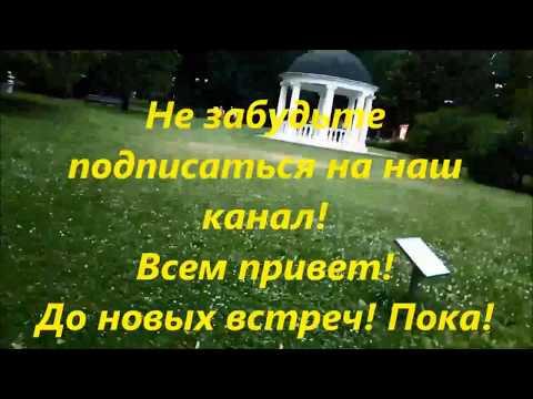 300-летняя Ива. Екатерининский парк в Москве. 300 hundred years tree in Moscow park.