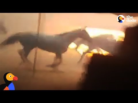Men Run Into Burning Barn To Save Horses Trapped by California Wildfires | The Dodo