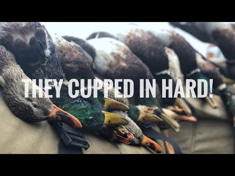 Duck Hunting 2018 EPIC Farm Pond 6 man LIMIT of GREENHEADS! - Indiana