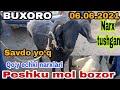 Gambar cover Qo'y echki narxlari Buxoro Peshko mol bozor narxlari