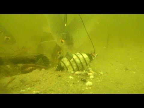 """Как реагирует рыба на """"УБИЙЦУ КАРАСЯ"""".Подводные съемки."""
