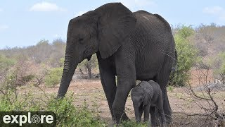 Watch Africam Tembe Elephant Park - LIVE Situated in an area that was once the ancient 'Ivory Route' linking Mozambique and Zululand, Tembe Elephant Park ...