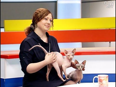 Наталья Романова, заводчик котов породы канадский сфинкс в программе «УТРО» на СТВ
