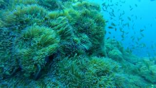 Koh Samui Diving 2015(Koh Samui Diving 2015., 2015-08-03T09:48:55.000Z)
