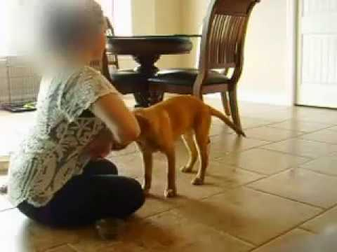 Awesome dog tricks