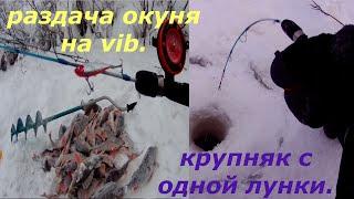 Рыбалка 2021 Раздача крупного окуня Гора окуней с одной лунки