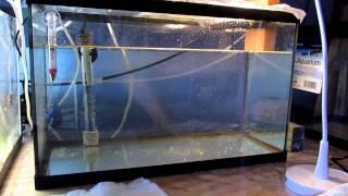 Raising Clownfish Past Metamorphosis Day 1