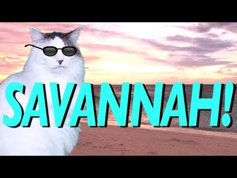 happy birthday savannah HAPPY BIRTHDAY SAVANNAH!   EPIC CAT Happy Birthday Song   YouTube happy birthday savannah