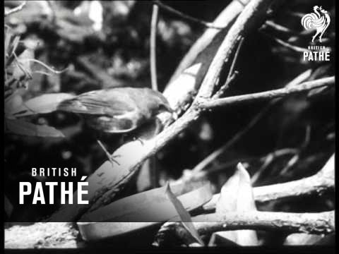 RAF Benevolent Fund Trailer (1953)