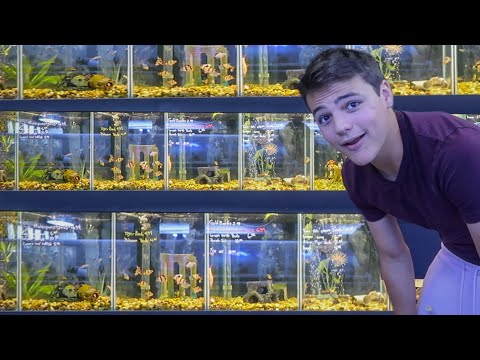 EPIC Fresh/Saltwater FISH STORE TOUR!!! *FEEDING*