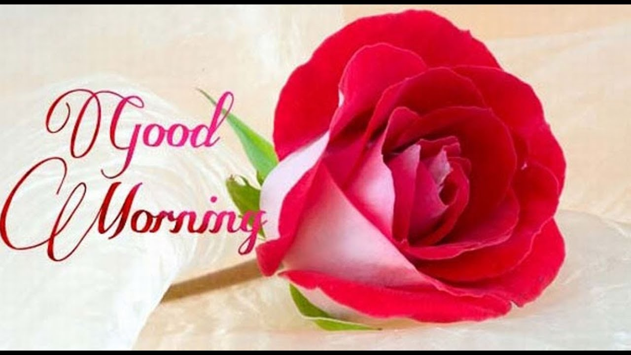 Latest Good Morning wishes, SMS, greetings, Whatsapp Video