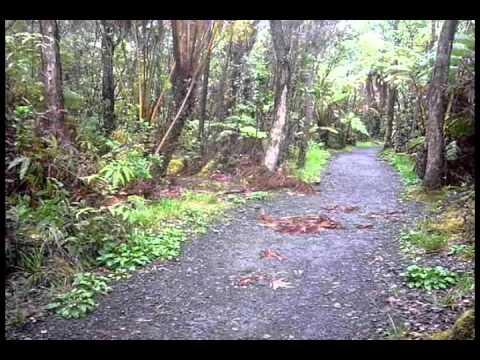 rain forest in Hilo, Hawaii