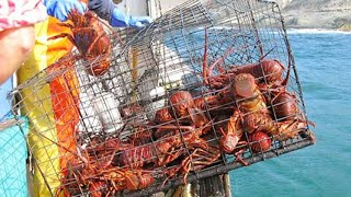 Amazing Giant Lobster Catch Trap in The Sea - Most Satisfying Lobster Fishing Video