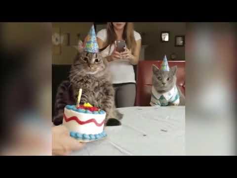 Прикол с котами—ржака до слез КОТ МУРЗИК