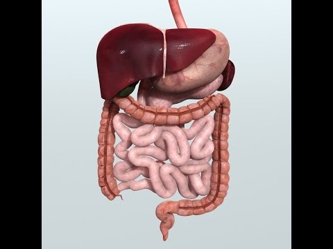Anatomy and Physiology of Digestive System