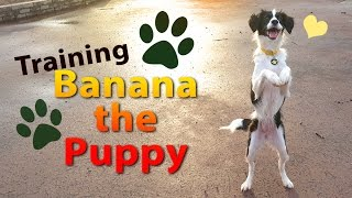 15 MONTH OLD PUPPY | Can a shelter dog be trained? | #DogTraining Update