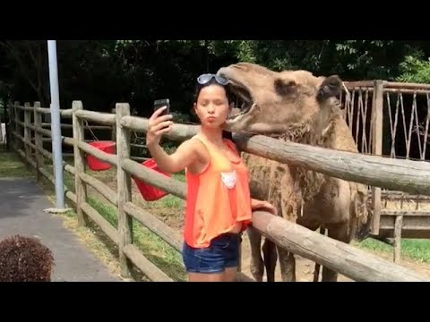 CAMELS / FERRETS / WHALES - You have NO IDEA HOW FUNNY they are!