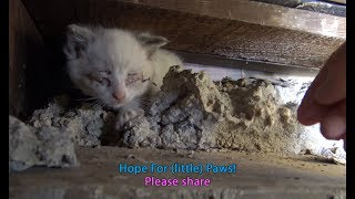 Hope For (little) Paws - I need a diet so I can crawl into places like this!!!  :-)