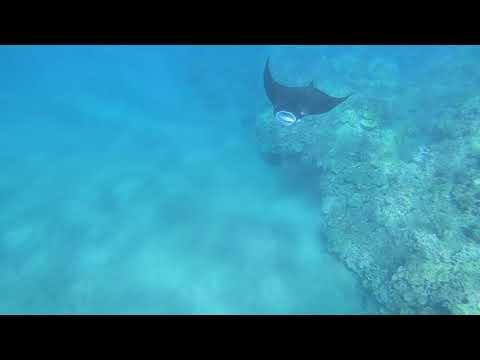 Hawaii 2019 Ulua Beach Snorkeling Compilation